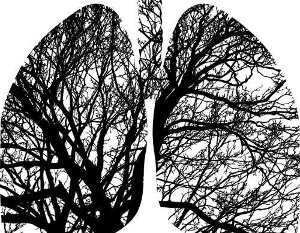 The Lungs Lakelands Acupuncture Penticton